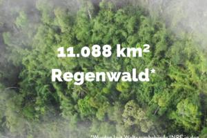 Entwaldung Brasilien